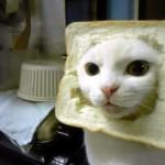 2012-05-catbread