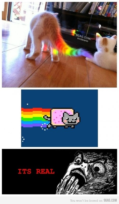NYANCAT 1494241 460s v1 Culture   Nyan Cat